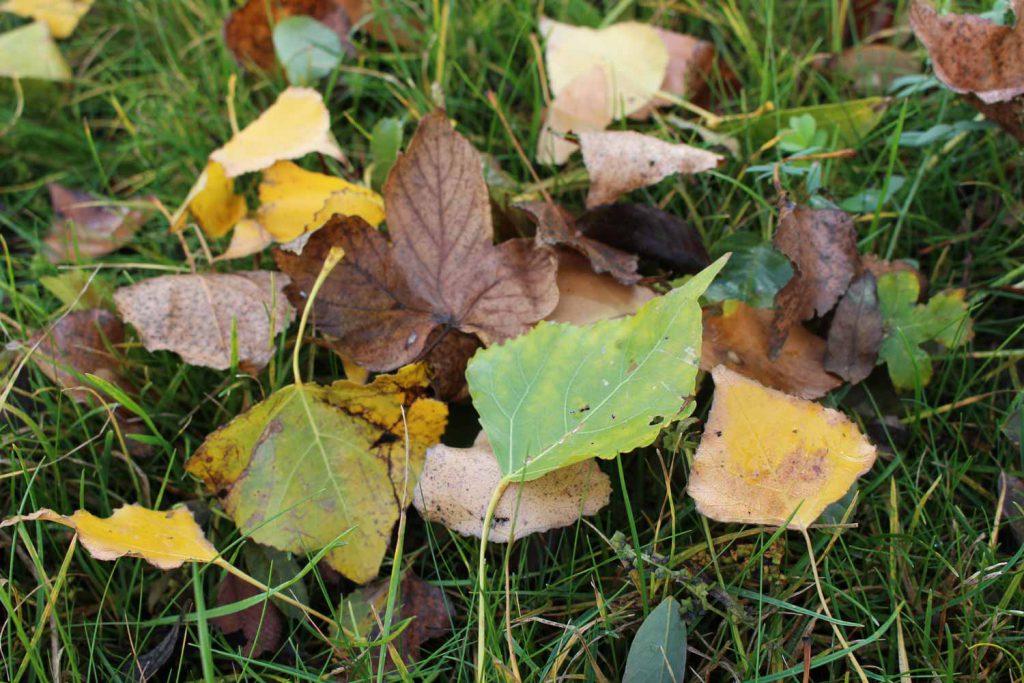 Herbstlaub liegt auf einer Wiese
