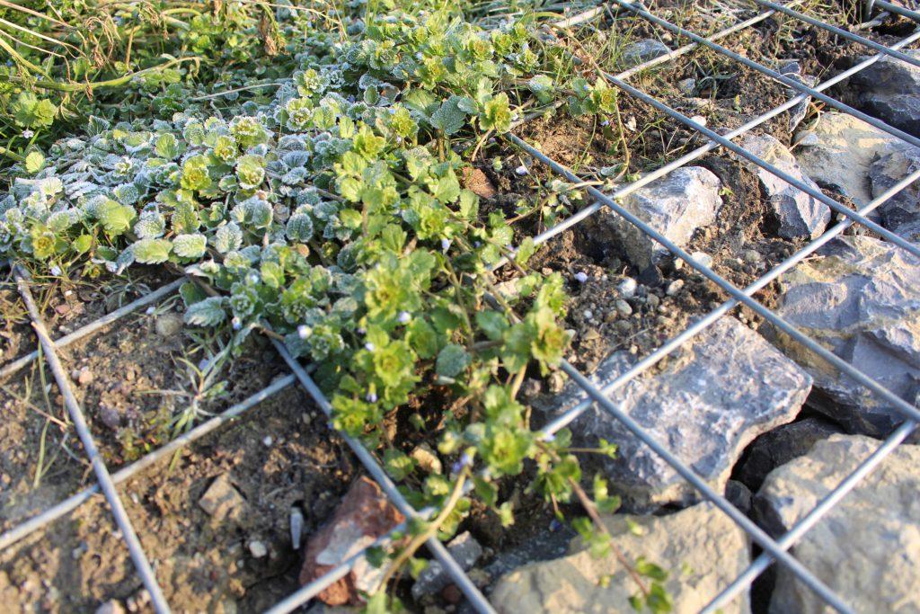 Zarte Pflanzen im Drahtgeflecht