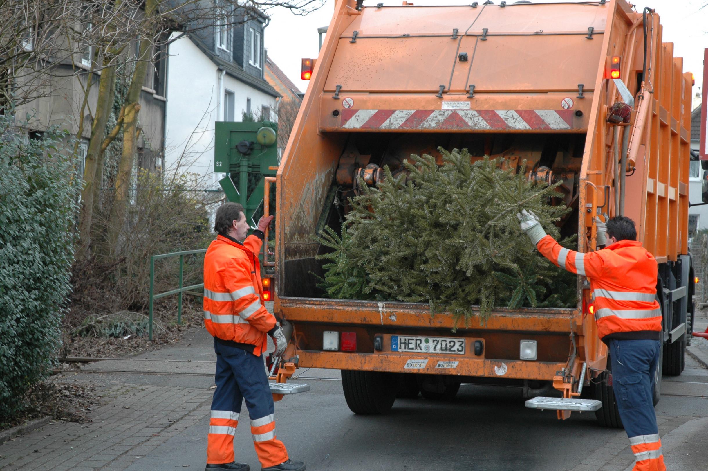 Müllwerker holen die Weihnachstbäume ab